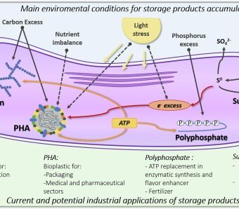 Up-scale challenges on biopolymer production from waste streams by Purple Phototrophic Bacteria mixed cultures: A critical review