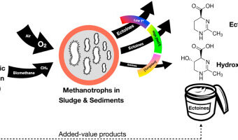 Elucidating the key environmental parameters during the production of ectoines from biogas by mixed methanotrophic consortia